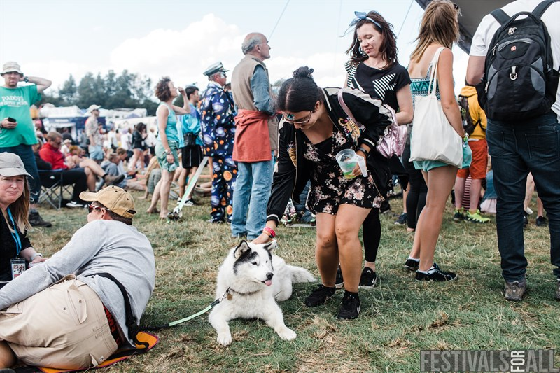 Lots of dogs at Standon Calling